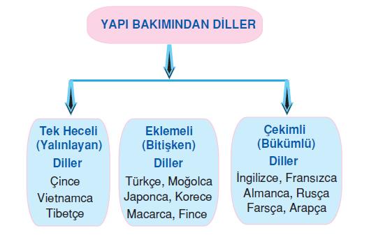 yapı bakımından diller
